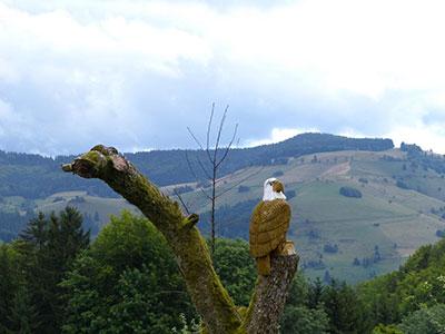 Schwarzwald 2013