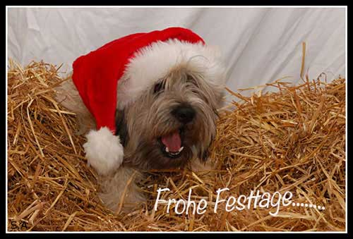 Frohe Festtage 🎄